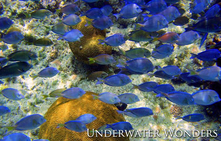 Discover Underwater Wonders