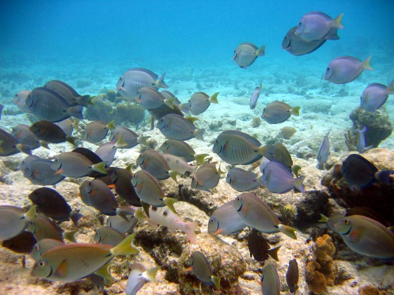 Pristine Snorkeling at Ditleff Point