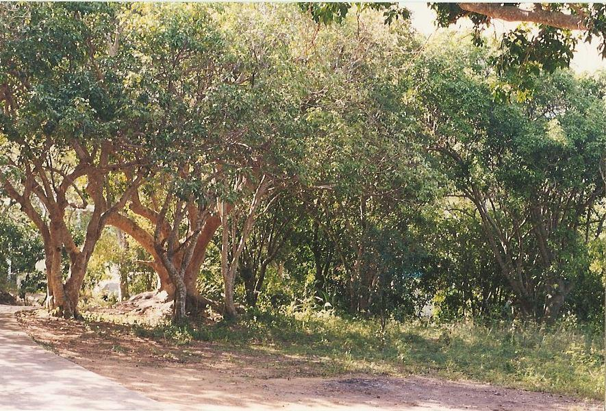 Large trees on the property