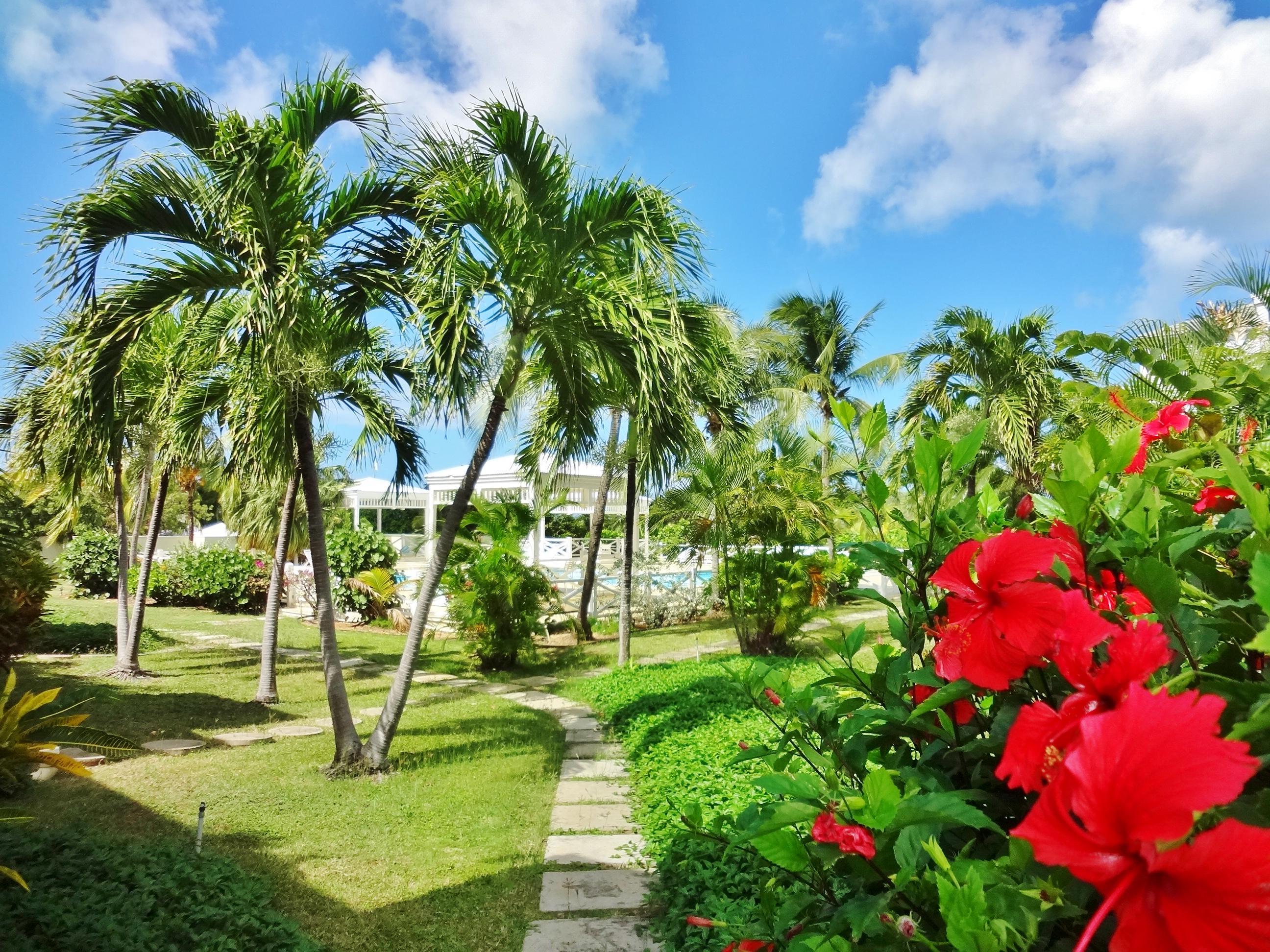 Exotic Landscaping Lines Walkways