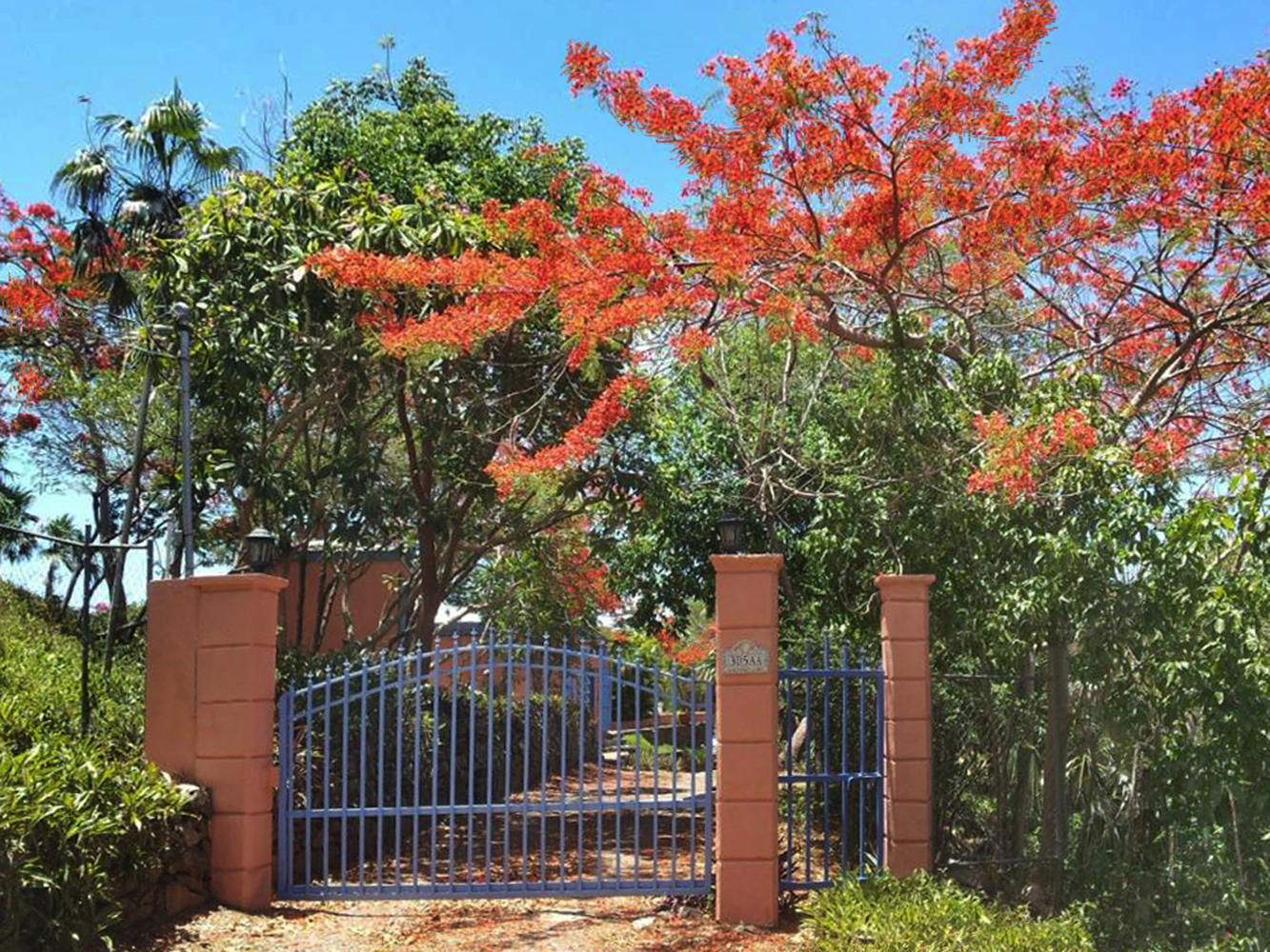Private Road to Lush Gated Entrance