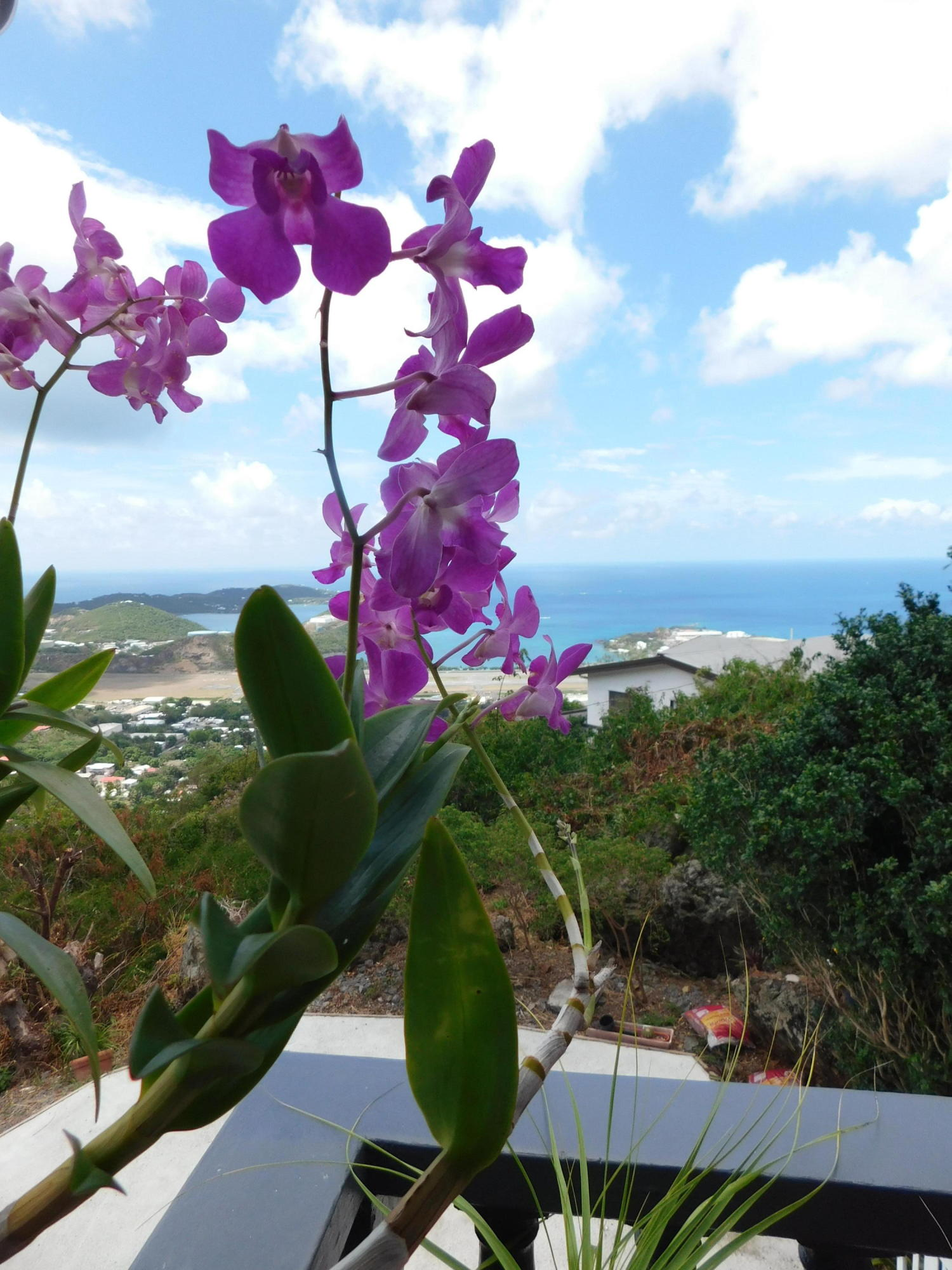 Orchids and view