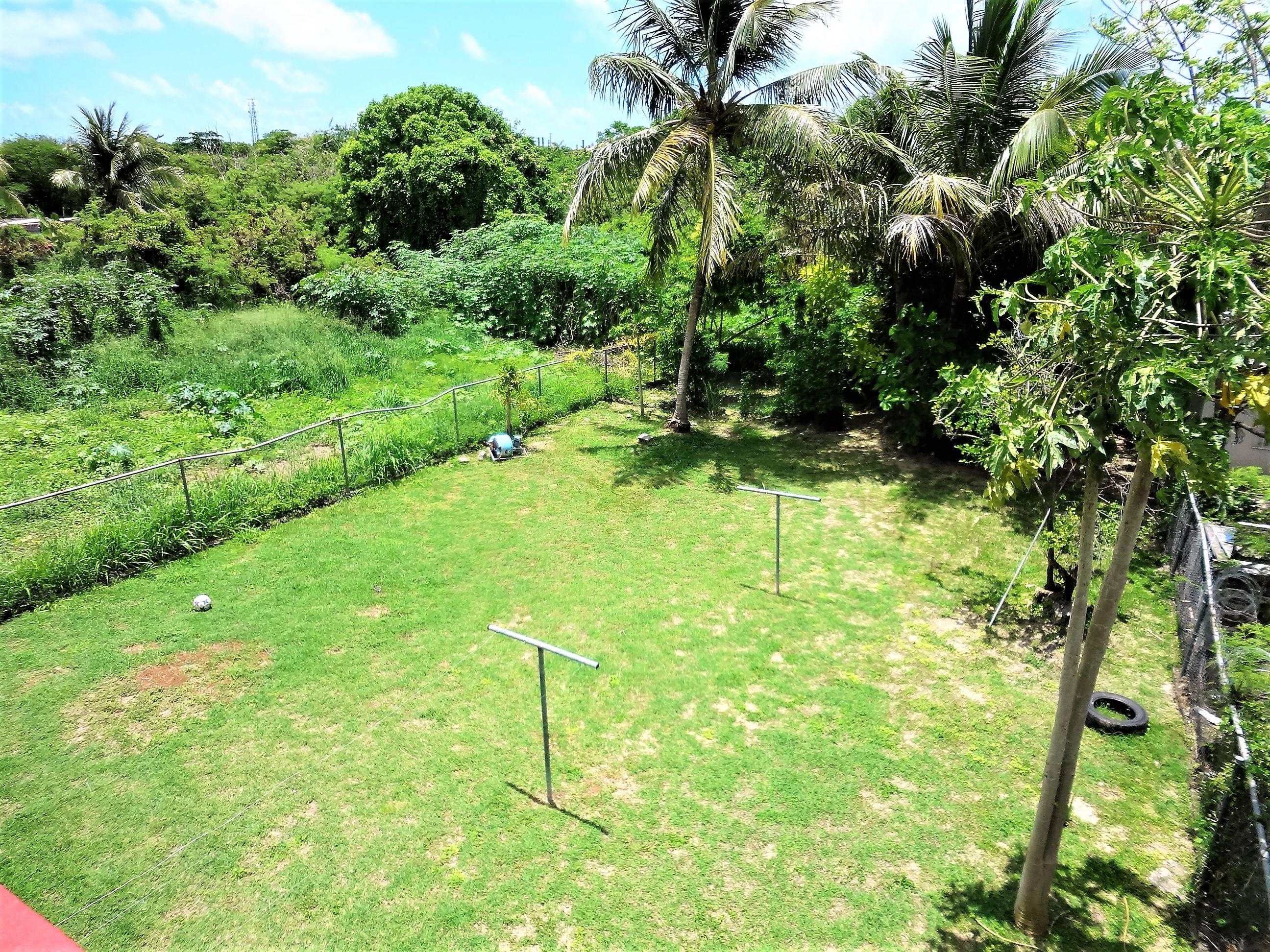 Fruit Trees in Backyard