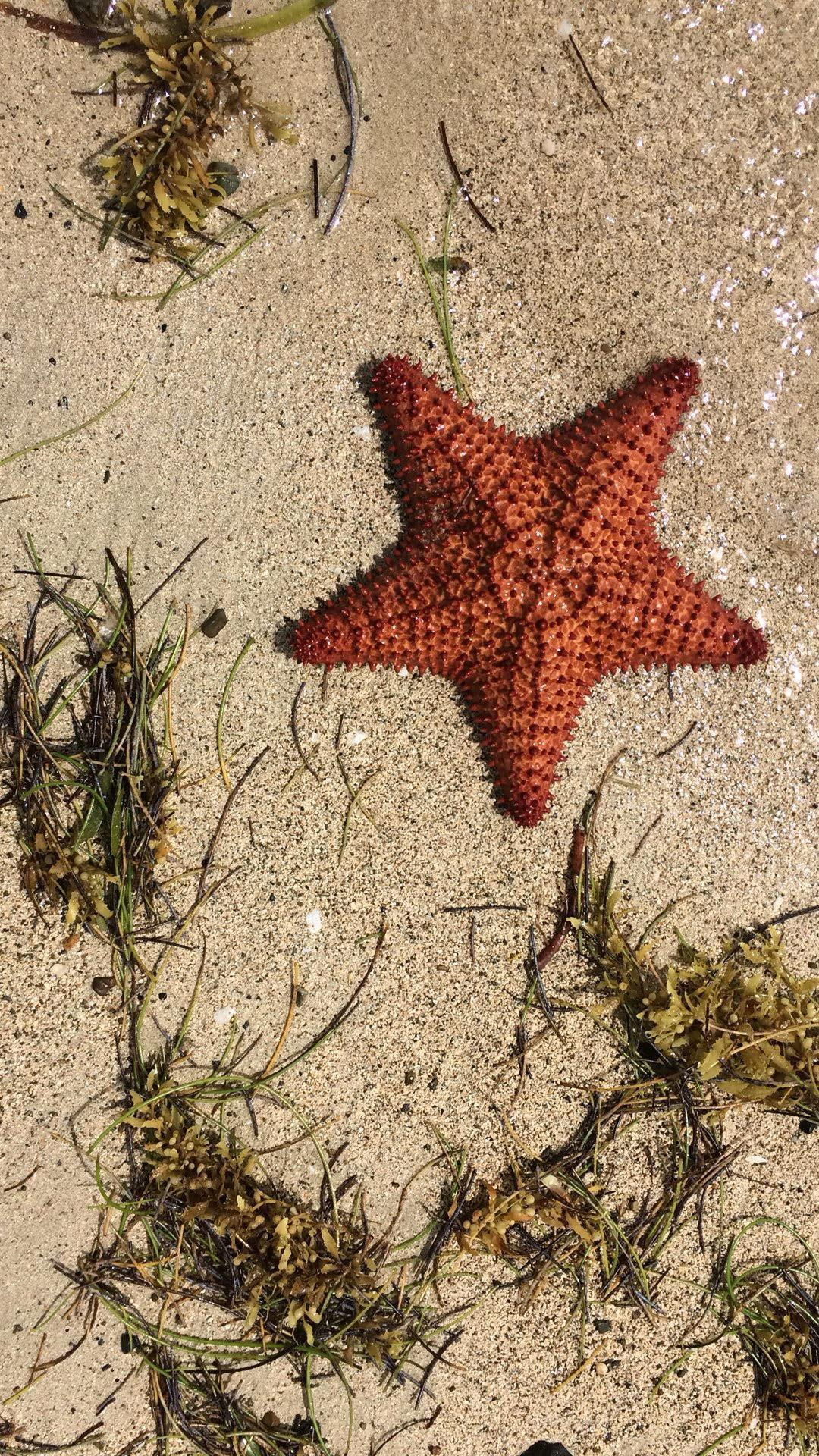 Starfish rescued by Seller