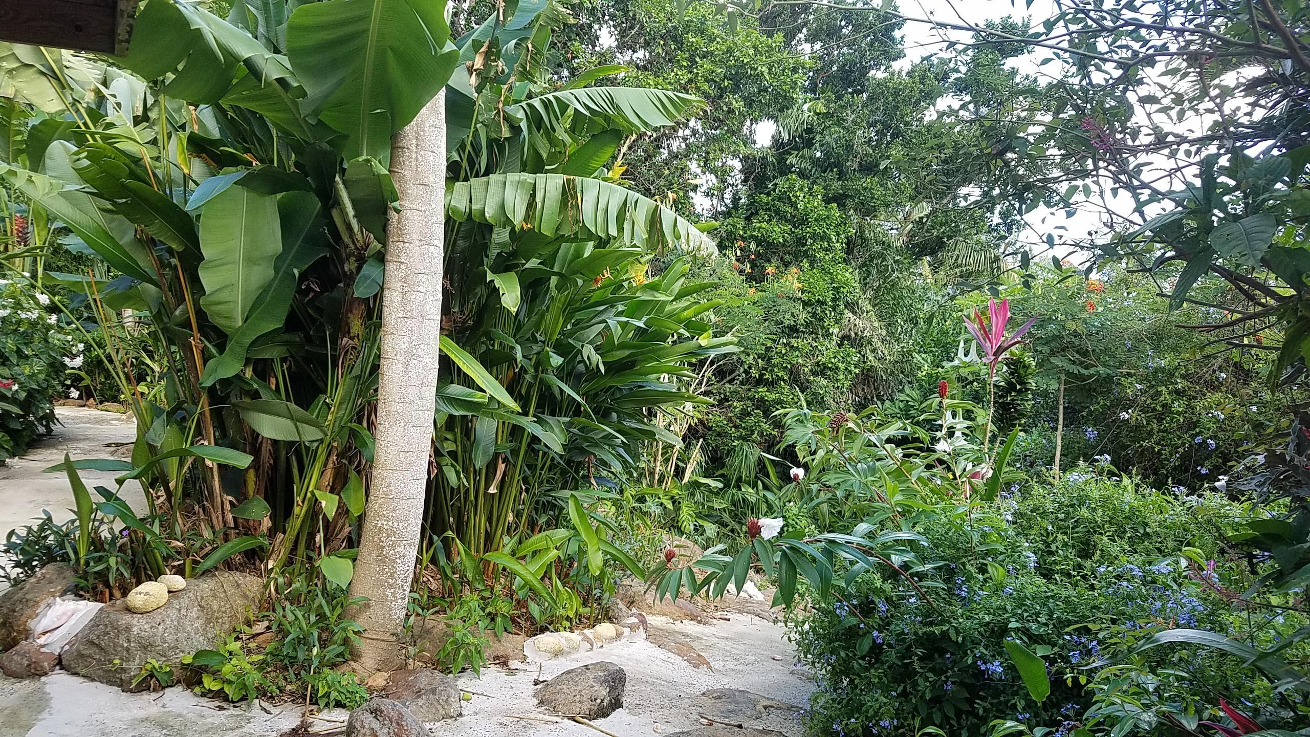 Garden Oasis 1
