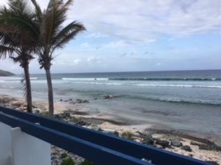 Beautiful Palms on Seashore