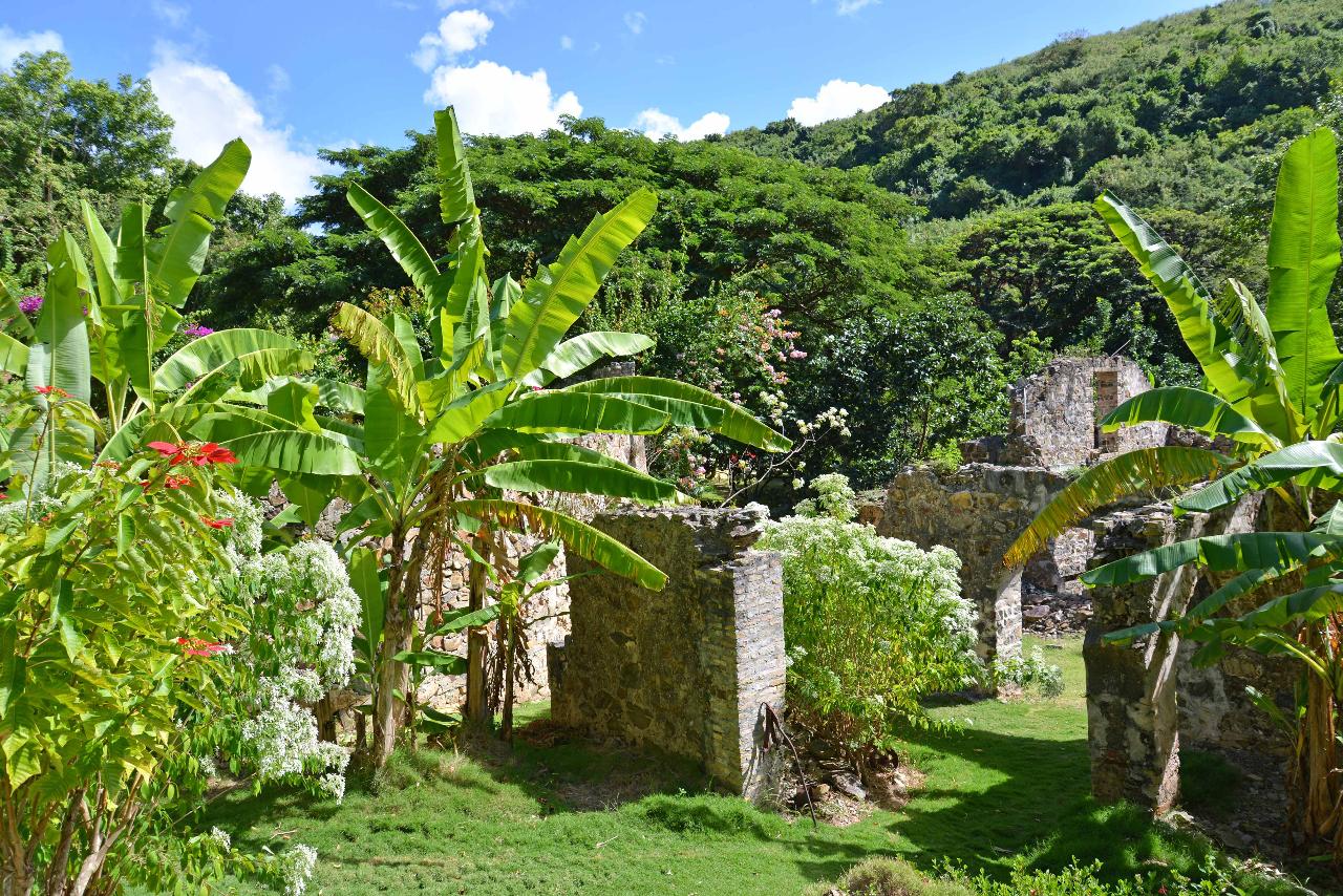 Bananas among the ruins