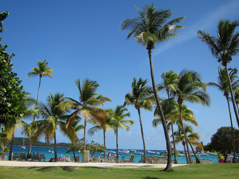 Beach and Palm Grove