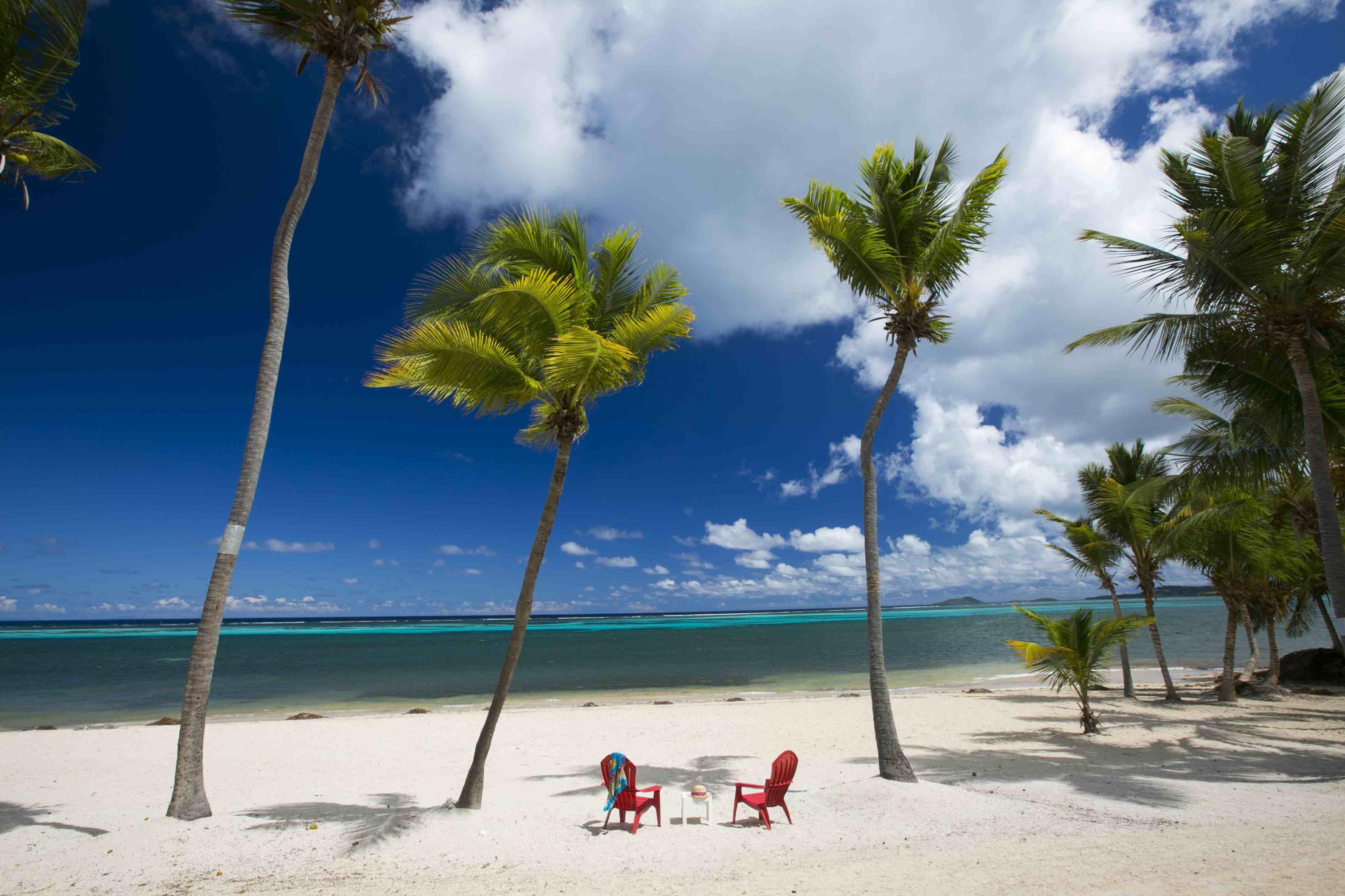 Glorious white sand and 2 palm trees