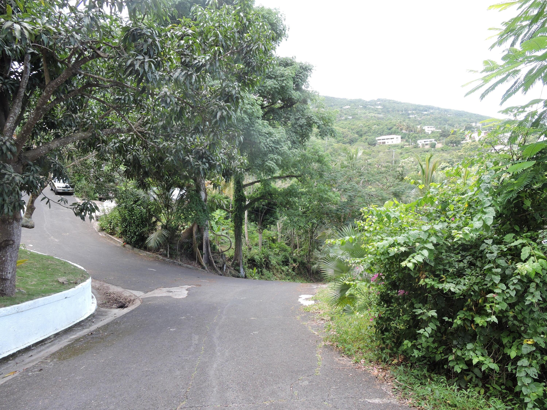 Leafy neighborhood