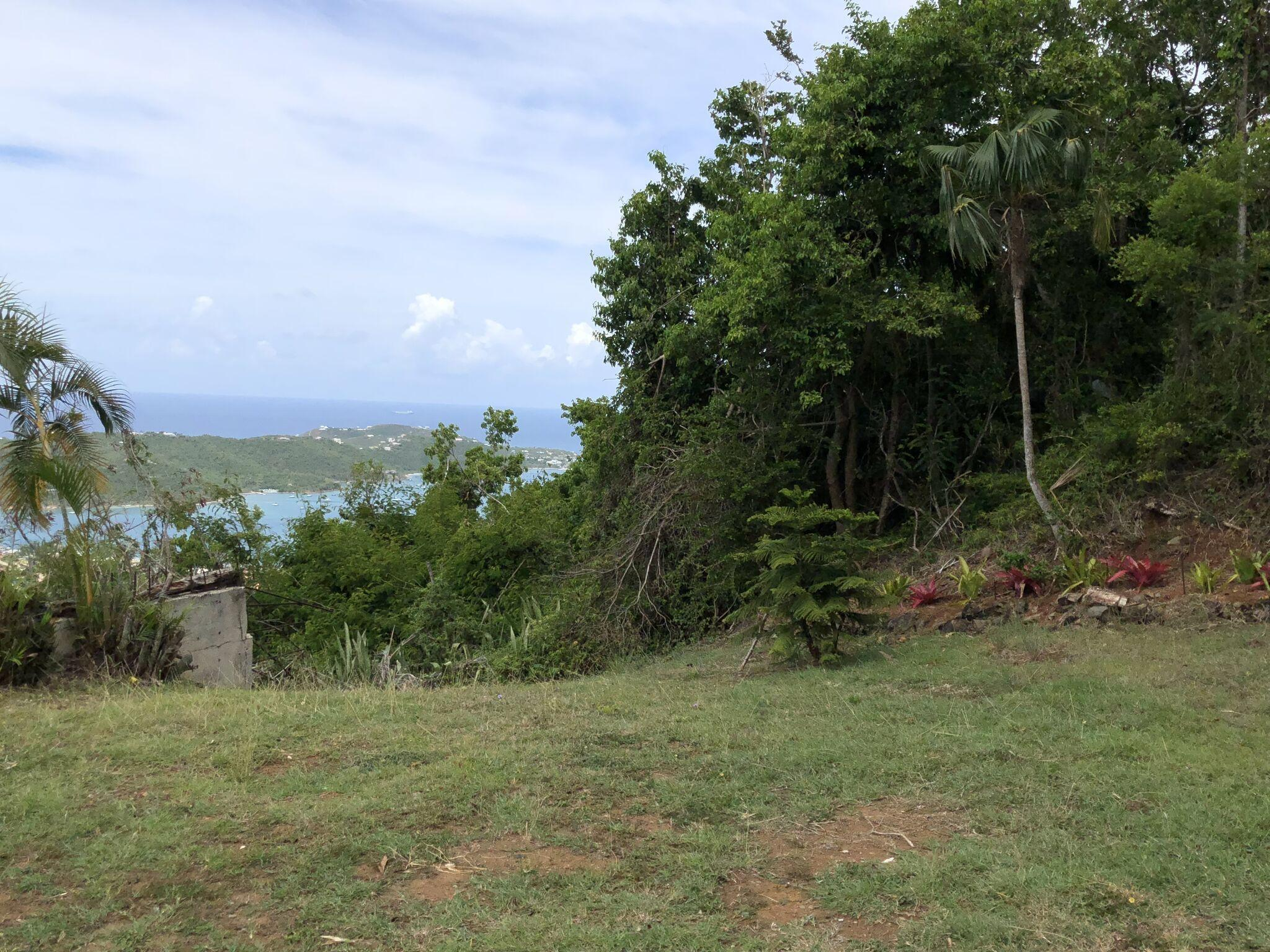 Back yard views