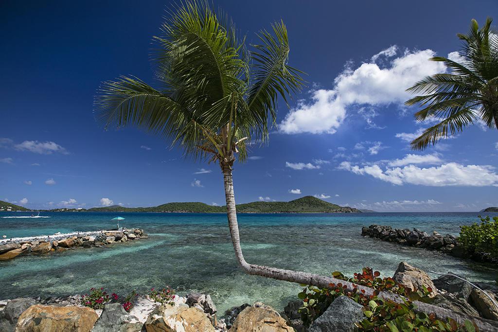 Amazing palm on beach