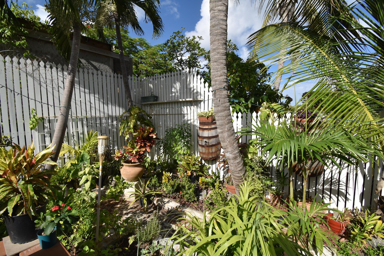 Courtyard Plantings